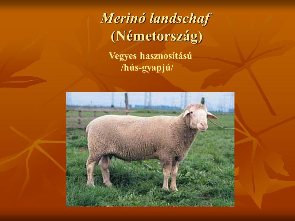 Merinó landschaf (Németország) Vegyes hasznosítású /hús-gyapjú/