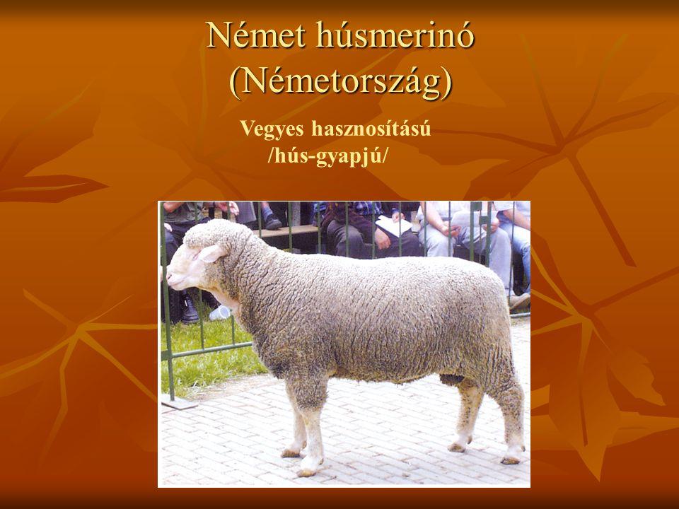 Német húsmerinó (Németország) Vegyes hasznosítású /hús-gyapjú/