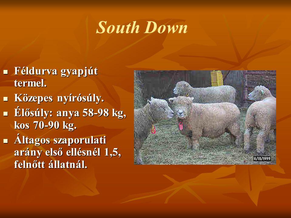 Féldurva gyapjút termel. Féldurva gyapjút termel. Közepes nyírósúly. Közepes nyírósúly. Élősúly: anya 58-98 kg, kos 70-90 kg. Élősúly: anya 58-98 kg,