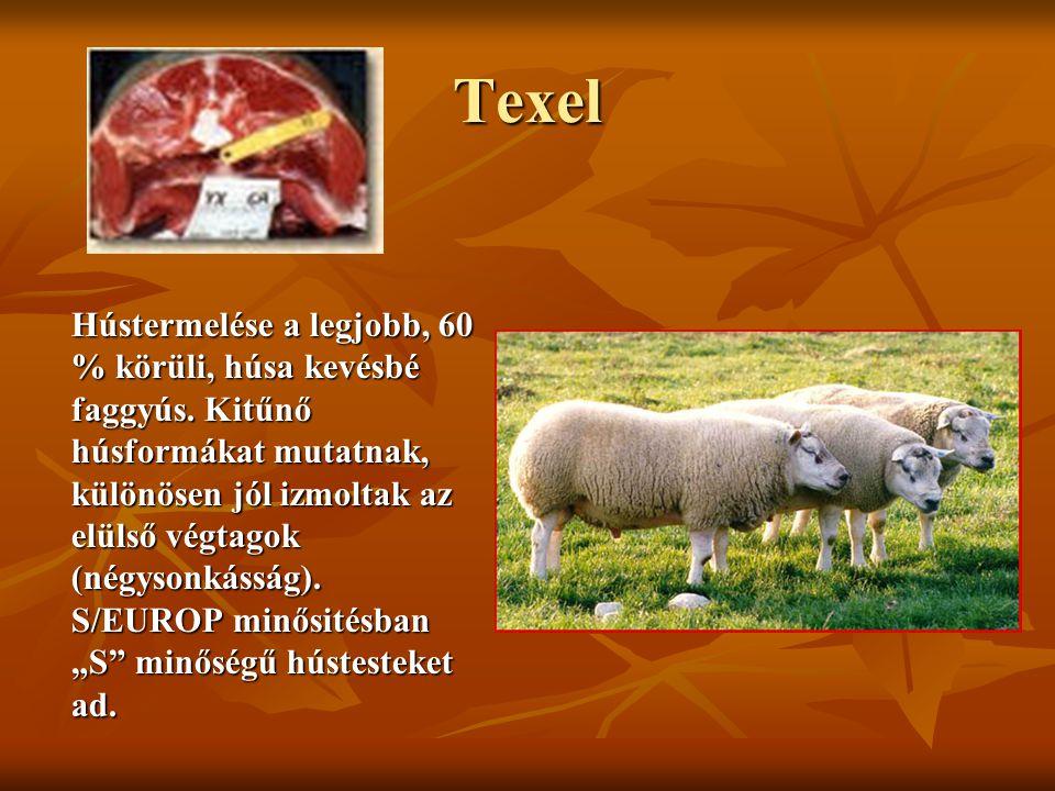 Texel Hústermelése a legjobb, 60 % körüli, húsa kevésbé faggyús. Kitűnő húsformákat mutatnak, különösen jól izmoltak az elülső végtagok (négysonkásság