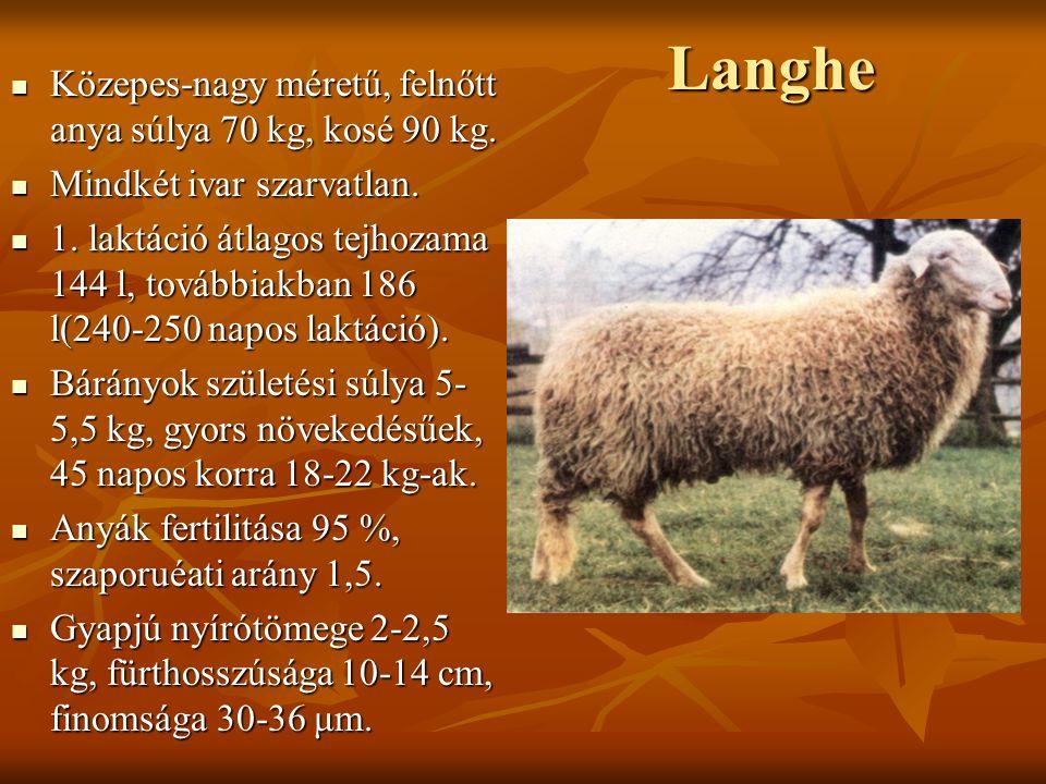 Langhe Közepes-nagy méretű, felnőtt anya súlya 70 kg, kosé 90 kg. Közepes-nagy méretű, felnőtt anya súlya 70 kg, kosé 90 kg. Mindkét ivar szarvatlan.