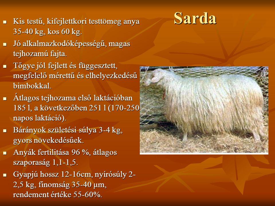 Sarda Kis testű, kifejlettkori testtömeg anya 35-40 kg, kos 60 kg. Kis testű, kifejlettkori testtömeg anya 35-40 kg, kos 60 kg. Jó alkalmazkodóképessé