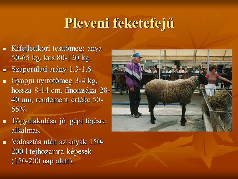 Pleveni feketefejű Kifejlettkori testtömeg: anya 50-65 kg, kos 80-120 kg. Kifejlettkori testtömeg: anya 50-65 kg, kos 80-120 kg. Szaporulati arány 1,3