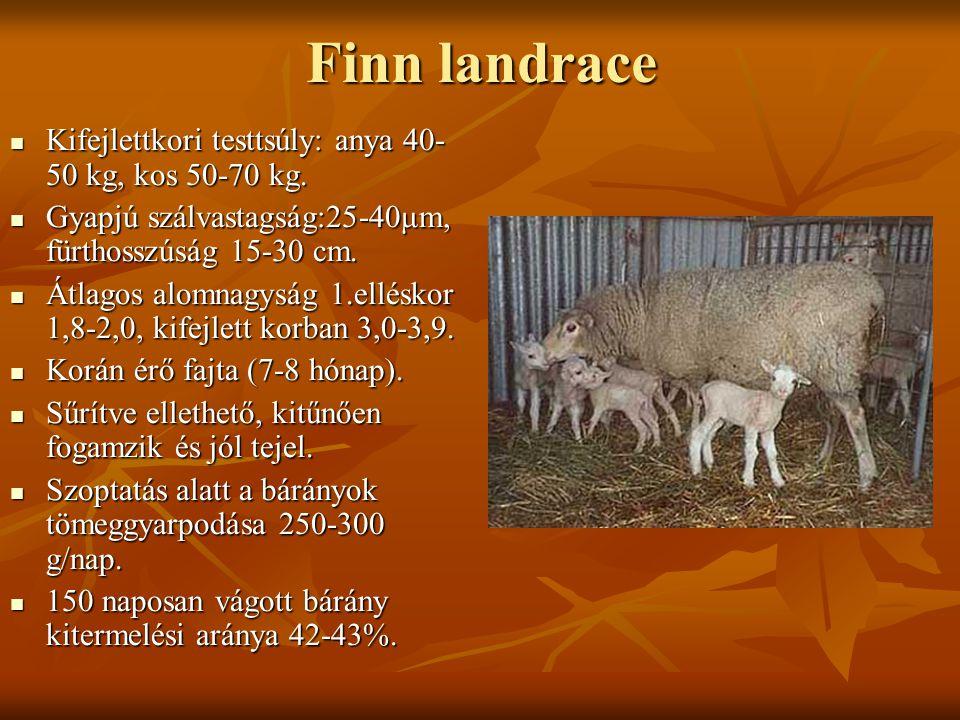 Finn landrace Kifejlettkori testtsúly: anya 40- 50 kg, kos 50-70 kg. Kifejlettkori testtsúly: anya 40- 50 kg, kos 50-70 kg. Gyapjú szálvastagság:25-40