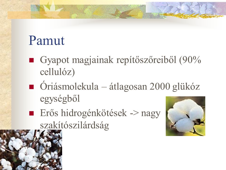 Pamut Gyapot magjainak repítőszőreiből (90% cellulóz) Óriásmolekula – átlagosan 2000 glükóz egységből Erős hidrogénkötések -> nagy szakítószilárdság