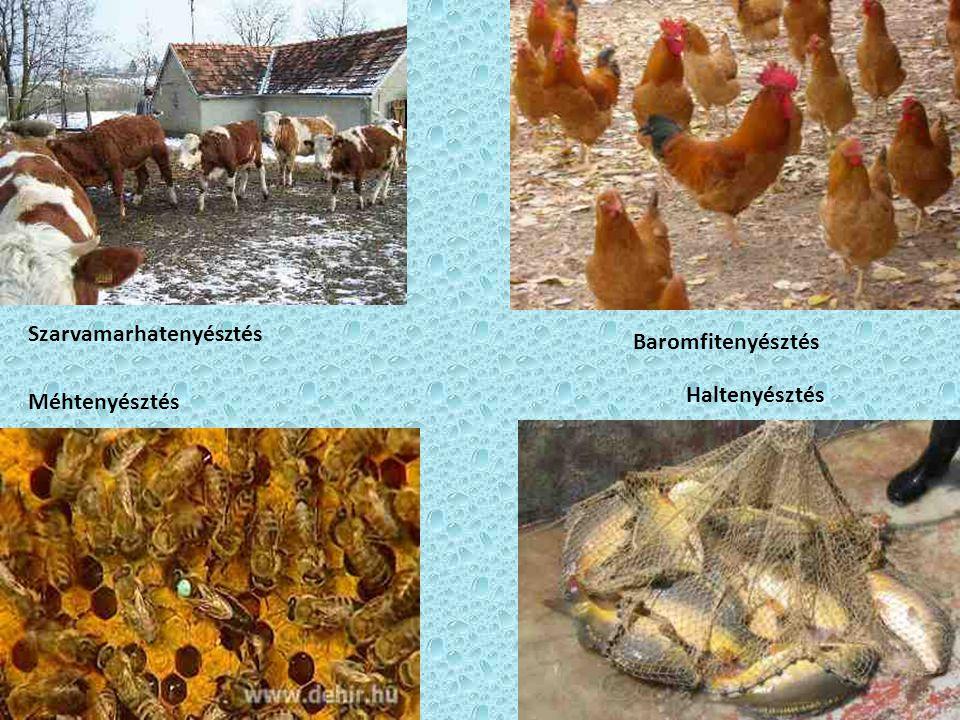 Szarvamarhatenyésztés Méhtenyésztés Haltenyésztés Baromfitenyésztés