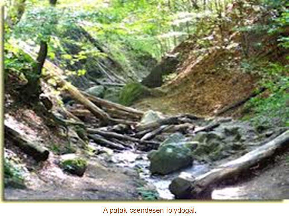 A Dera patak a Pilis leghosszab vízfolyása.