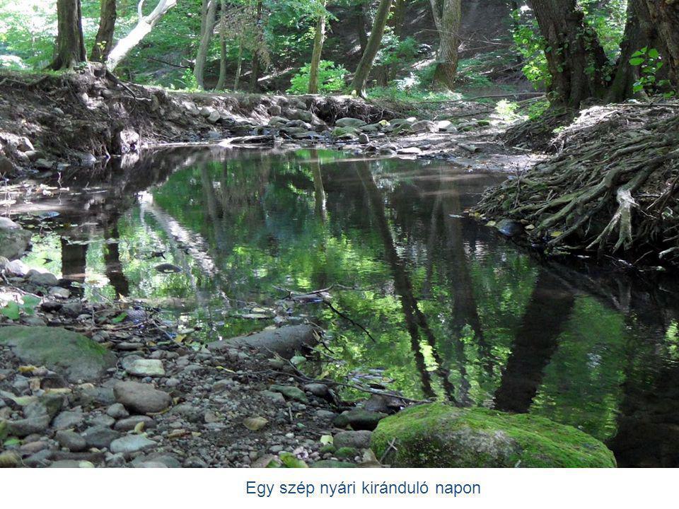 A patak csendesen folydogál.