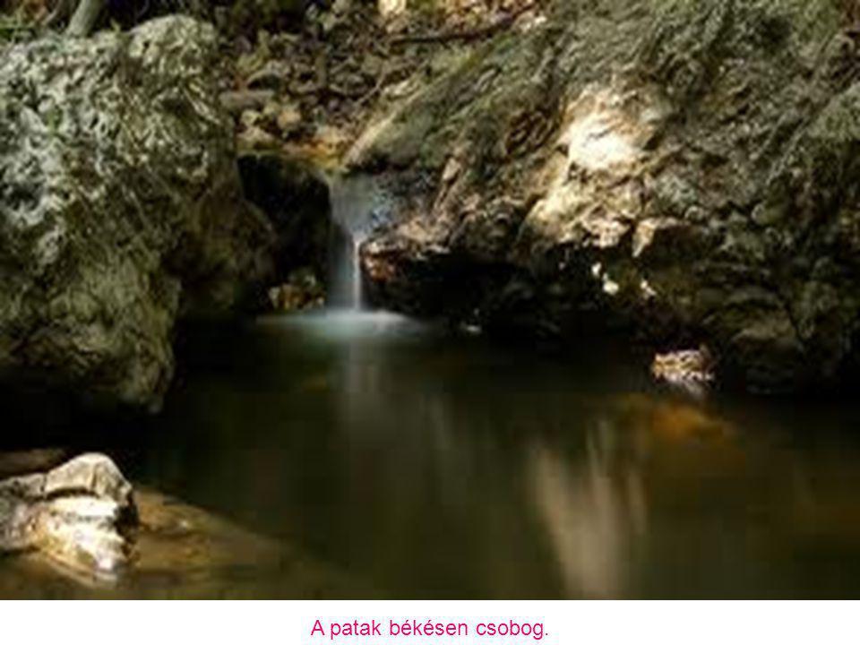 A patak legfőbb tápterülete a Pilis-tető – Dobogókő közötti térségben van.