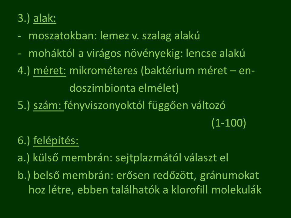 3.) alak: -moszatokban: lemez v. szalag alakú -moháktól a virágos növényekig: lencse alakú 4.) méret: mikrométeres (baktérium méret – en- doszimbionta