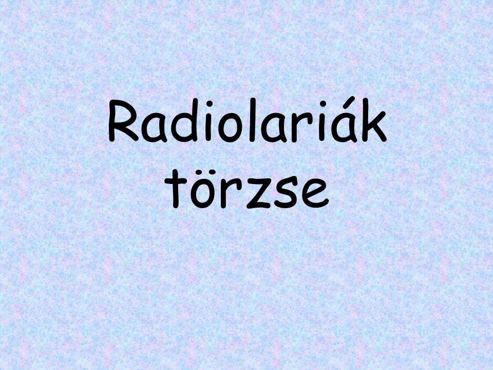 Radiolariák törzse
