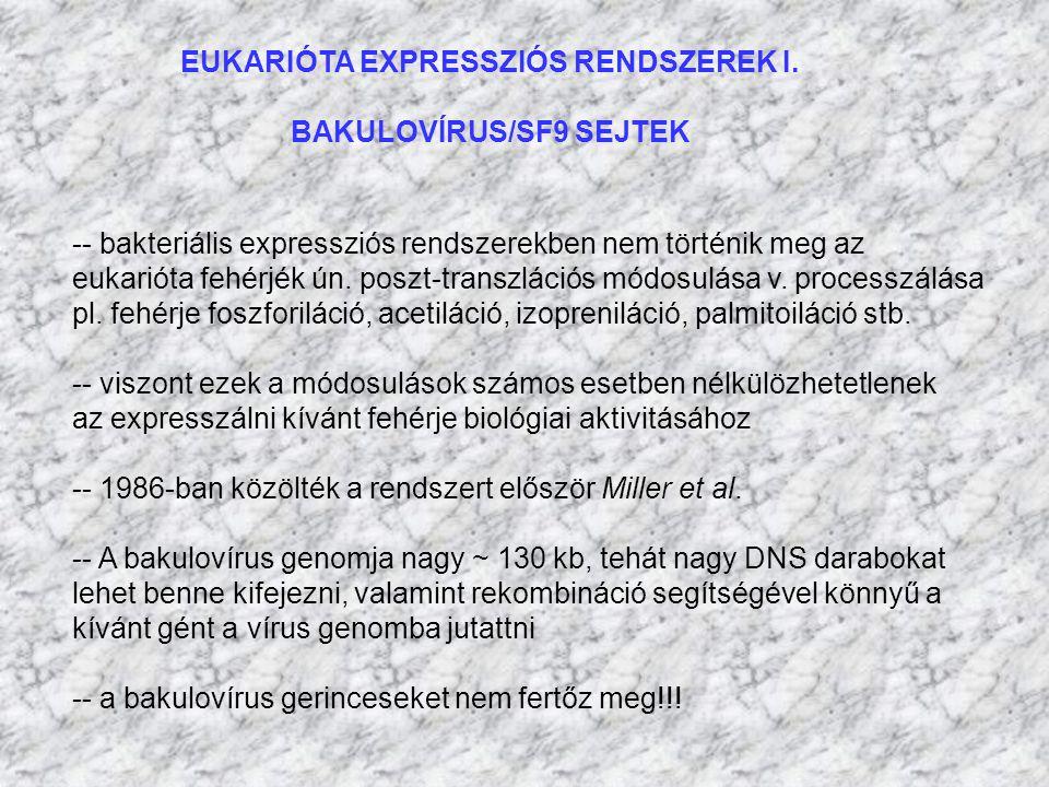 EUKARIÓTA EXPRESSZIÓS RENDSZEREK I. BAKULOVÍRUS/SF9 SEJTEK -- bakteriális expressziós rendszerekben nem történik meg az eukarióta fehérjék ún. poszt-t