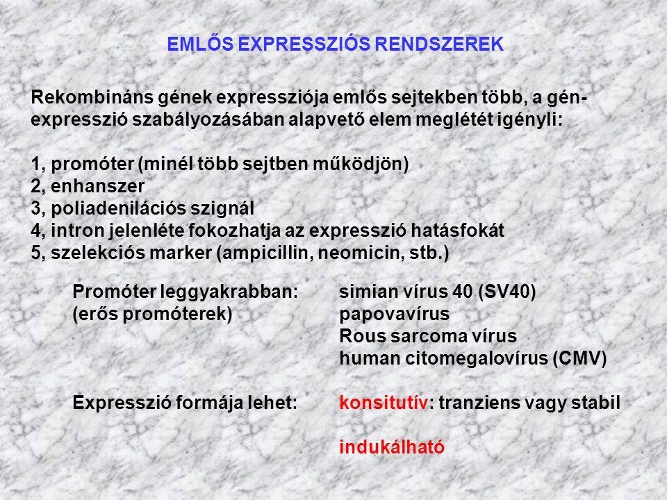 EMLŐS EXPRESSZIÓS RENDSZEREK Rekombináns gének expressziója emlős sejtekben több, a gén- expresszió szabályozásában alapvető elem meglétét igényli: 1,