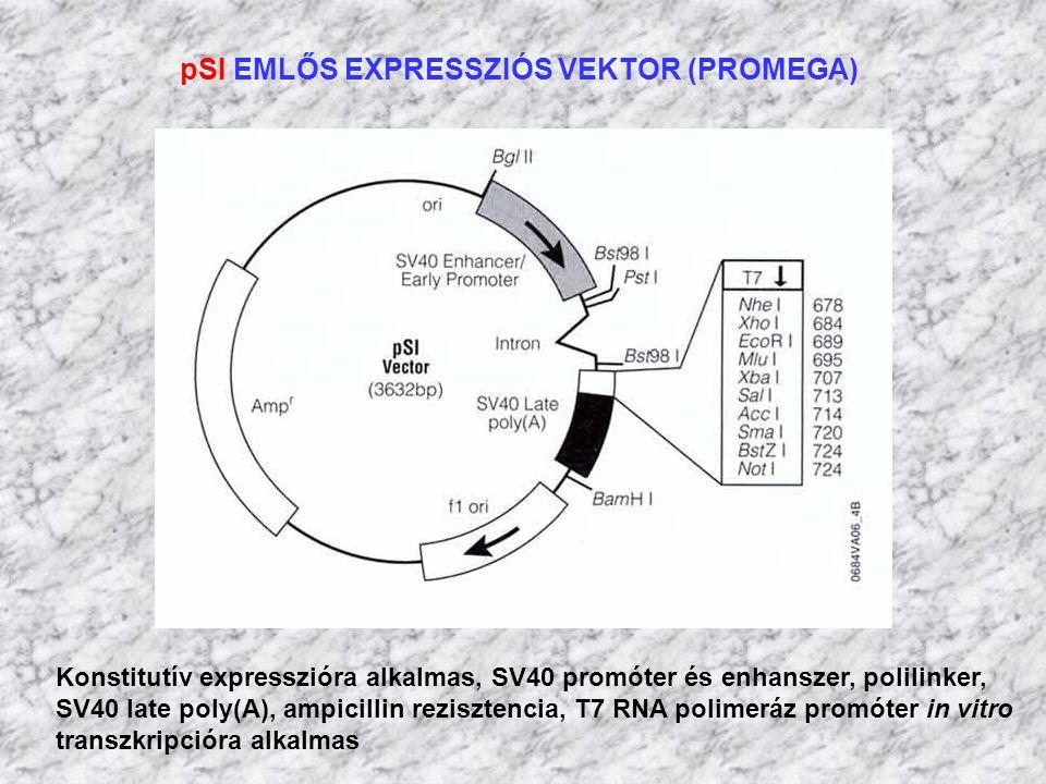 pSI EMLŐS EXPRESSZIÓS VEKTOR (PROMEGA) Konstitutív expresszióra alkalmas, SV40 promóter és enhanszer, polilinker, SV40 late poly(A), ampicillin rezisz