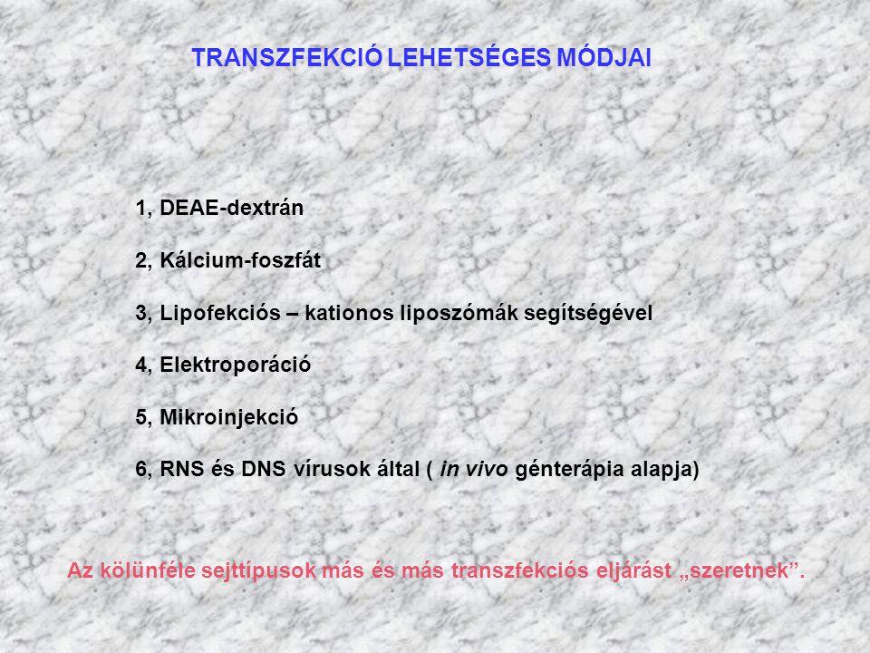 TRANSZFEKCIÓ LEHETSÉGES MÓDJAI 1, DEAE-dextrán 2, Kálcium-foszfát 3, Lipofekciós – kationos liposzómák segítségével 4, Elektroporáció 5, Mikroinjekció