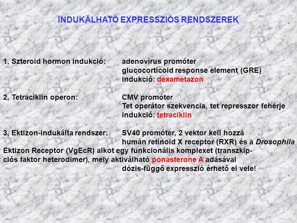 INDUKÁLHATÓ EXPRESSZIÓS RENDSZEREK 1, Szteroid hormon indukció:adenovírus promóter glucocorticoid response element (GRE) indukció: dexametazon 2, Tetr