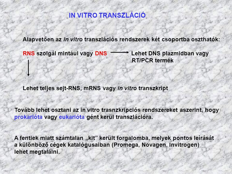IN VITRO TRANSZLÁCIÓ Alapvetően az in vitro transzlációs rendszerek két csoportba oszthatók: RNS szolgál mintául vagy DNS Lehet DNS plazmidban vagy RT