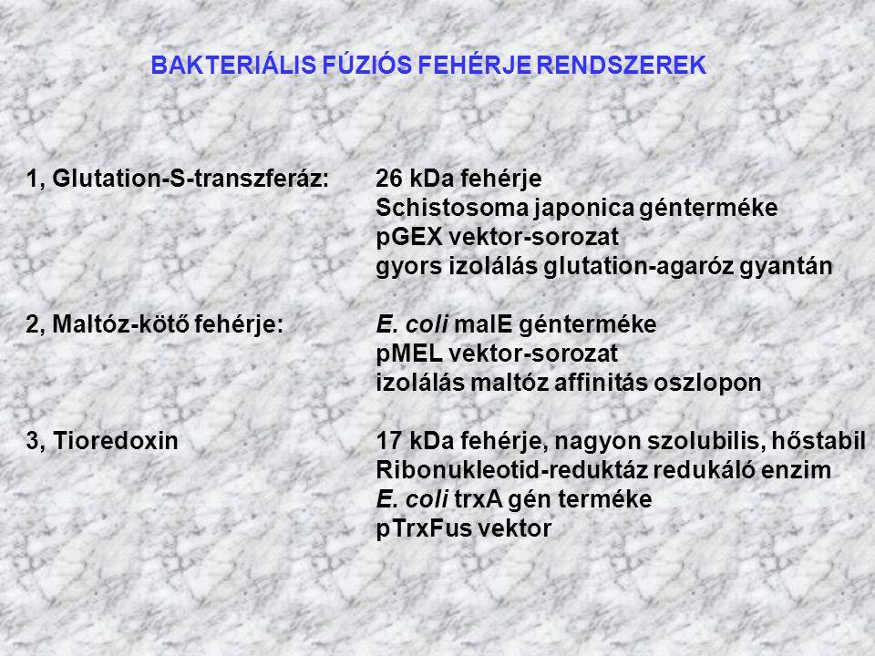 BAKTERIÁLIS FÚZIÓS FEHÉRJE RENDSZEREK 1, Glutation-S-transzferáz: 26 kDa fehérje Schistosoma japonica génterméke pGEX vektor-sorozat gyors izolálás gl