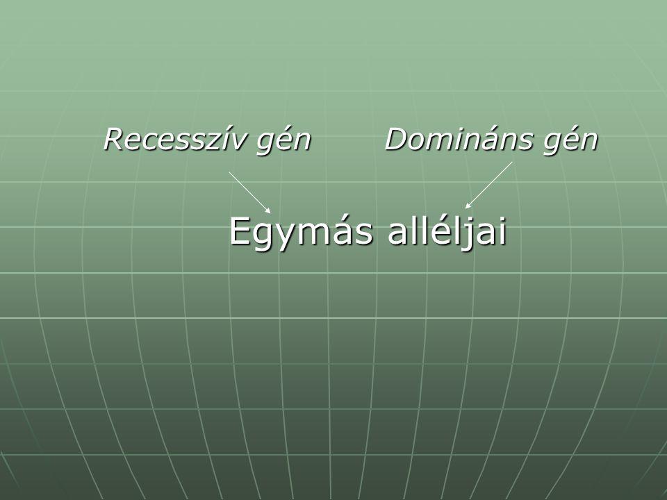 Recesszív gén Domináns gén Recesszív gén Domináns gén Egymás alléljai Egymás alléljai