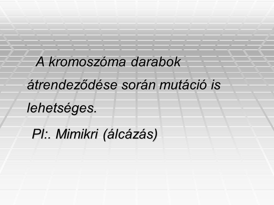 A kromoszóma darabok átrendeződése során mutáció is lehetséges. A kromoszóma darabok átrendeződése során mutáció is lehetséges. Pl:. Mimikri (álcázás)