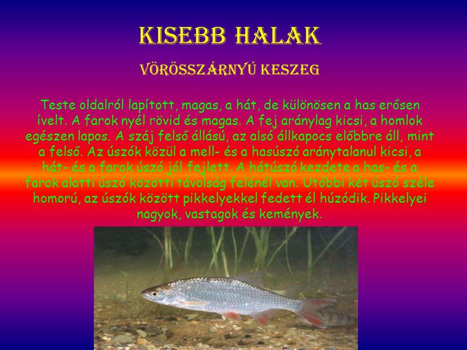 Kisebb halak Vörösszárnyú keszeg Teste oldalról lapított, magas, a hát, de különösen a has erősen ívelt. A farok nyél rövid és magas. A fej aránylag k