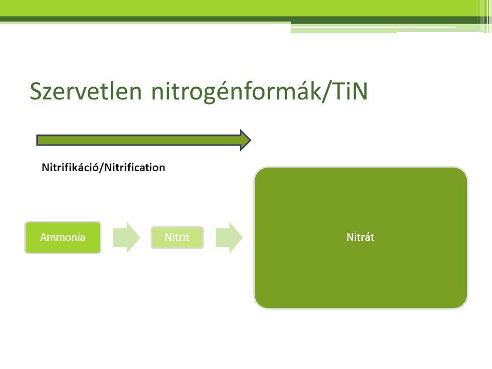Szervetlen nitrogénformák/TiN Ammonia Nitrit Nitrát Nitrifikáció/Nitrification