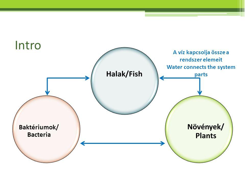 Intro Halak/Fish Növények/ Plants Baktériumok/ Bacteria A víz kapcsolja össze a rendszer elemeit Water connects the system parts