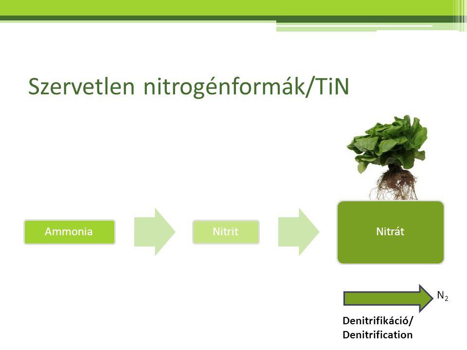 Szervetlen nitrogénformák/TiN Ammonia Nitrit Nitrát Denitrifikáció/ Denitrification N2N2