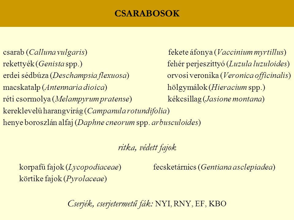 CSARABOSOK csarab (Calluna vulgaris) fekete áfonya (Vaccinium myrtillus) rekettyék (Genista spp.) fehér perjeszittyó (Luzula luzuloides) erdei sédbúza
