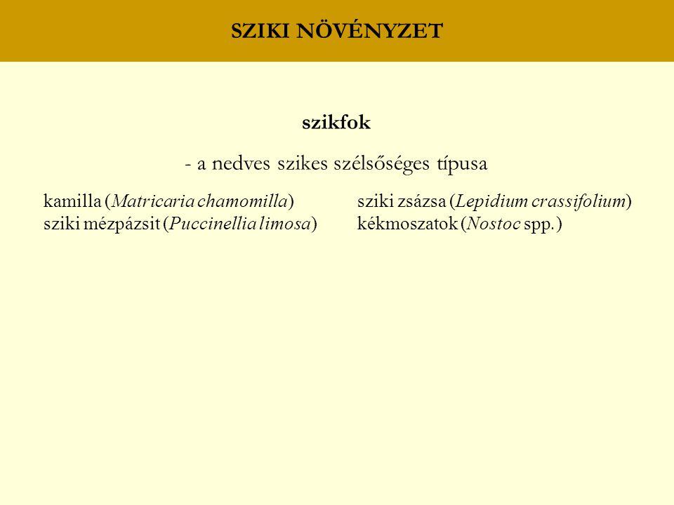 SZIKI NÖVÉNYZET szikfok - a nedves szikes szélsőséges típusa kamilla (Matricaria chamomilla) sziki zsázsa (Lepidium crassifolium) sziki mézpázsit (Puc