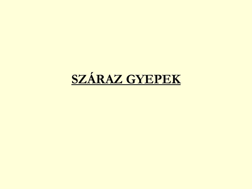 SZÁRAZ GYEPEK