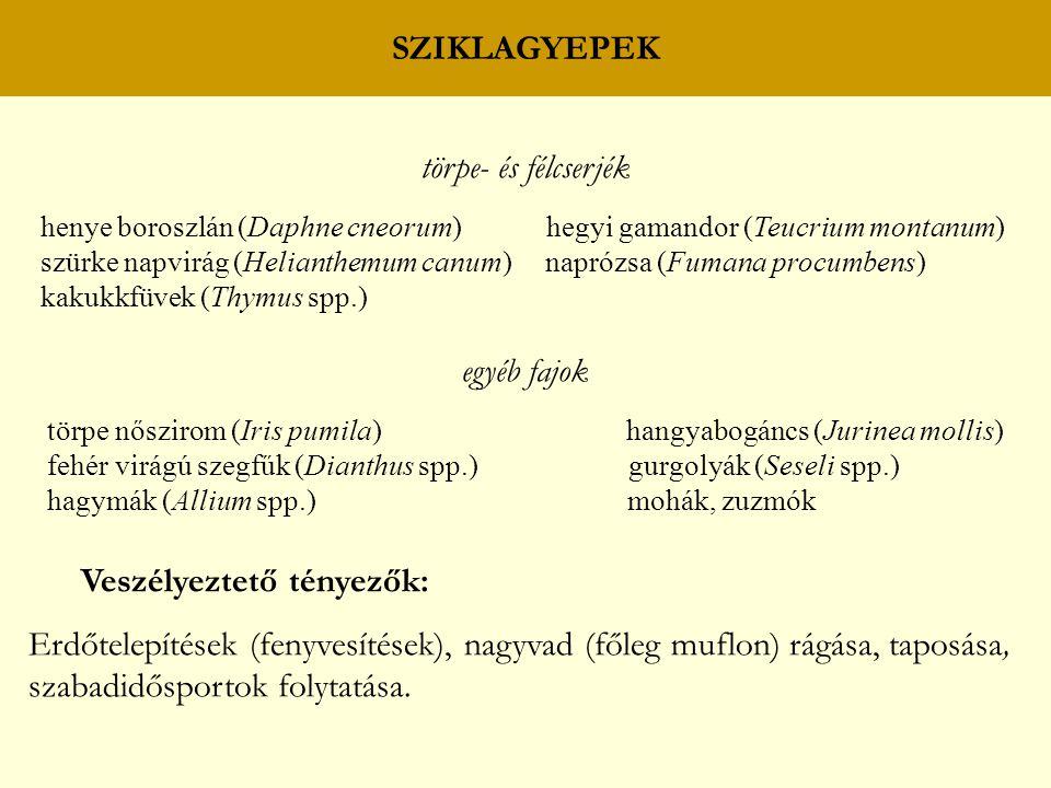 SZIKLAGYEPEK törpe- és félcserjék henye boroszlán (Daphne cneorum) hegyi gamandor (Teucrium montanum) szürke napvirág (Helianthemum canum) naprózsa (F
