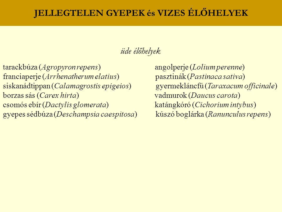 JELLEGTELEN GYEPEK és VIZES ÉLŐHELYEK üde élőhelyek tarackbúza (Agropyron repens) angolperje (Lolium perenne) franciaperje (Arrhenatherum elatius) pas