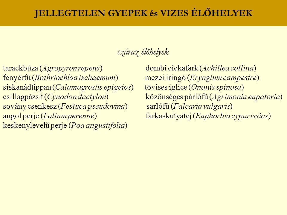 JELLEGTELEN GYEPEK és VIZES ÉLŐHELYEK száraz élőhelyek tarackbúza (Agropyron repens) dombi cickafark (Achillea collina) fenyérfű (Bothriochloa ischaem