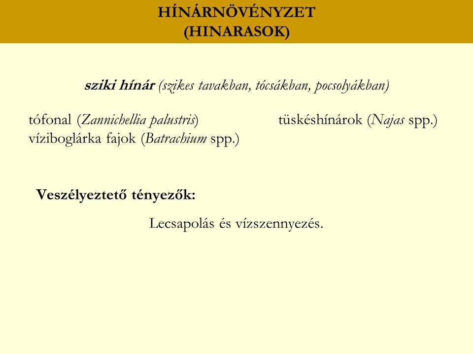 HÍNÁRNÖVÉNYZET (HINARASOK) sziki hínár (szikes tavakban, tócsákban, pocsolyákban) tófonal (Zannichellia palustris) tüskéshínárok (Najas spp.) vízibogl