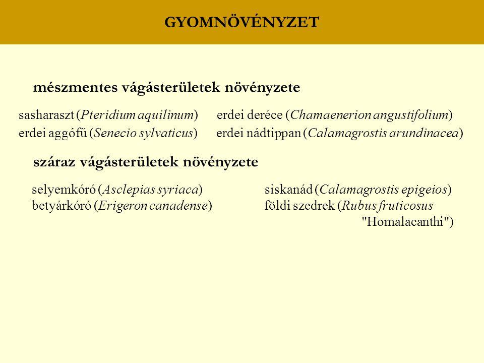 GYOMNÖVÉNYZET mészmentes vágásterületek növényzete sasharaszt (Pteridium aquilinum) erdei deréce (Chamaenerion angustifolium) erdei aggófű (Senecio sy