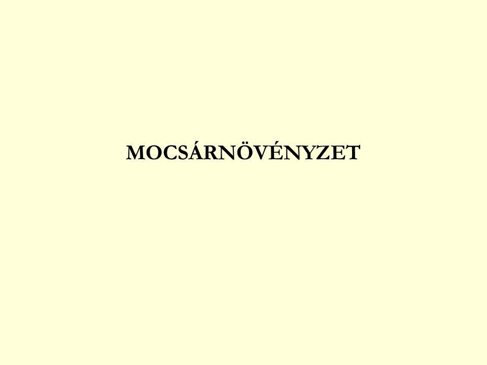 MOCSÁRNÖVÉNYZET