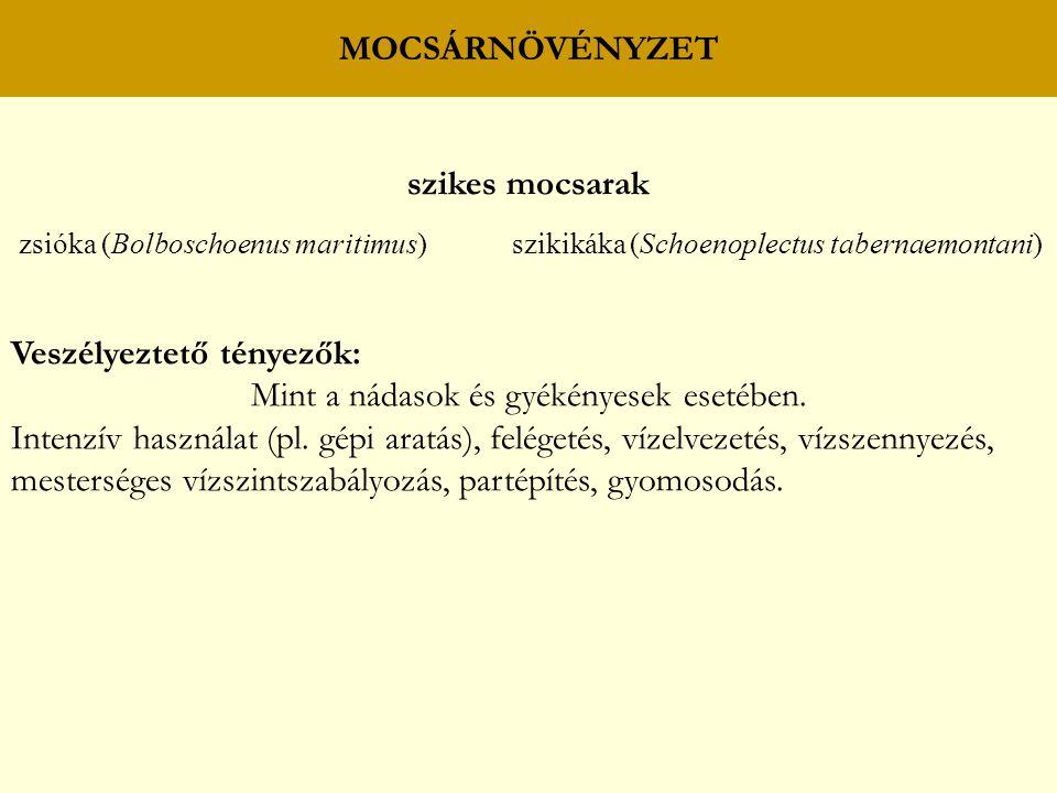 MOCSÁRNÖVÉNYZET szikes mocsarak zsióka (Bolboschoenus maritimus) szikikáka (Schoenoplectus tabernaemontani) Veszélyeztető tényezők: Mint a nádasok és