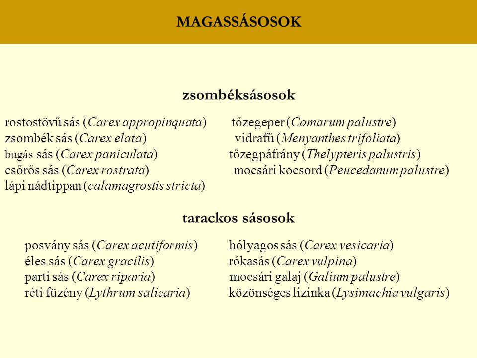 MAGASSÁSOSOK zsombéksásosok rostostövű sás (Carex appropinquata) tőzegeper (Comarum palustre) zsombék sás (Carex elata) vidrafű (Menyanthes trifoliata
