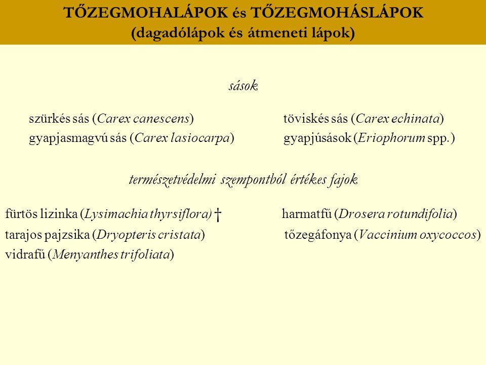 TŐZEGMOHALÁPOK és TŐZEGMOHÁSLÁPOK (dagadólápok és átmeneti lápok) sások szürkés sás (Carex canescens) töviskés sás (Carex echinata) gyapjasmagvú sás (