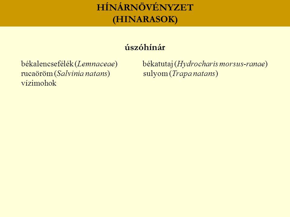 HÍNÁRNÖVÉNYZET (HINARASOK) úszóhínár békalencsefélék (Lemnaceae) békatutaj (Hydrocharis morsus-ranae) rucaöröm (Salvinia natans) sulyom (Trapa natans)