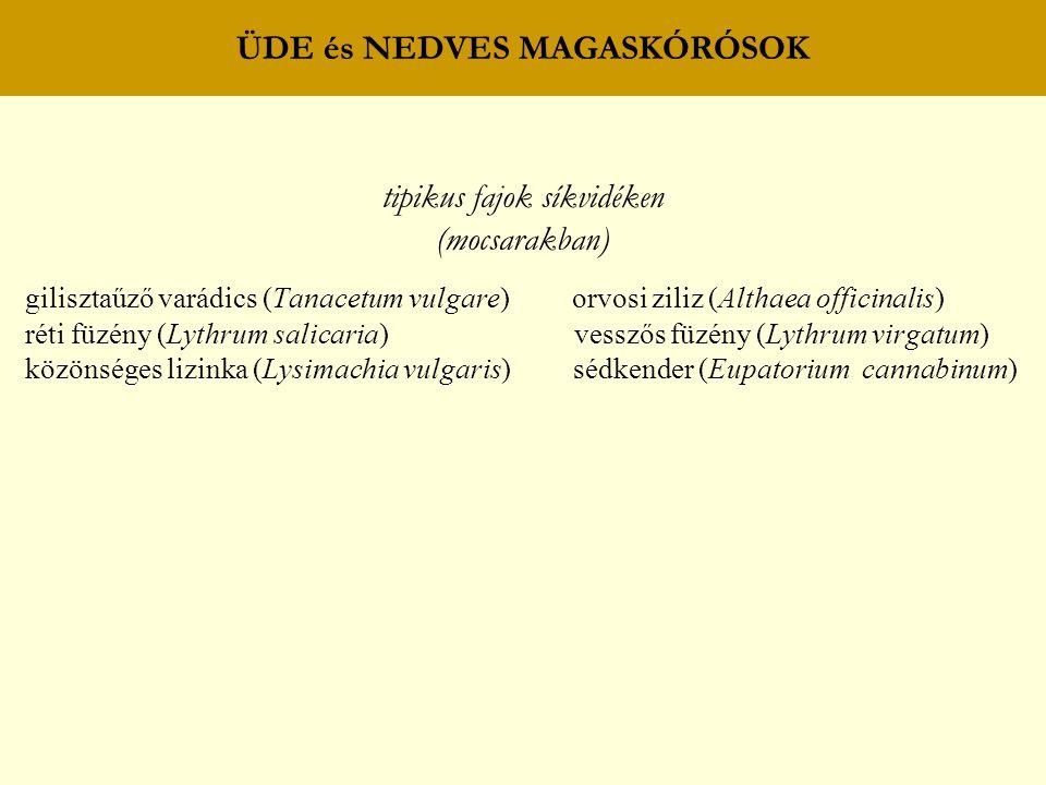 ÜDE és NEDVES MAGASKÓRÓSOK tipikus fajok síkvidéken (mocsarakban) gilisztaűző varádics (Tanacetum vulgare) orvosi ziliz (Althaea officinalis) réti füz