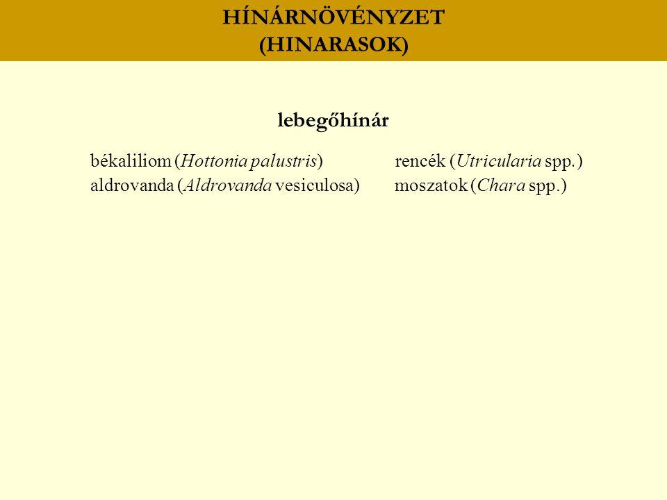 HÍNÁRNÖVÉNYZET (HINARASOK) lebegőhínár békaliliom (Hottonia palustris) rencék (Utricularia spp.) aldrovanda (Aldrovanda vesiculosa) moszatok (Chara sp