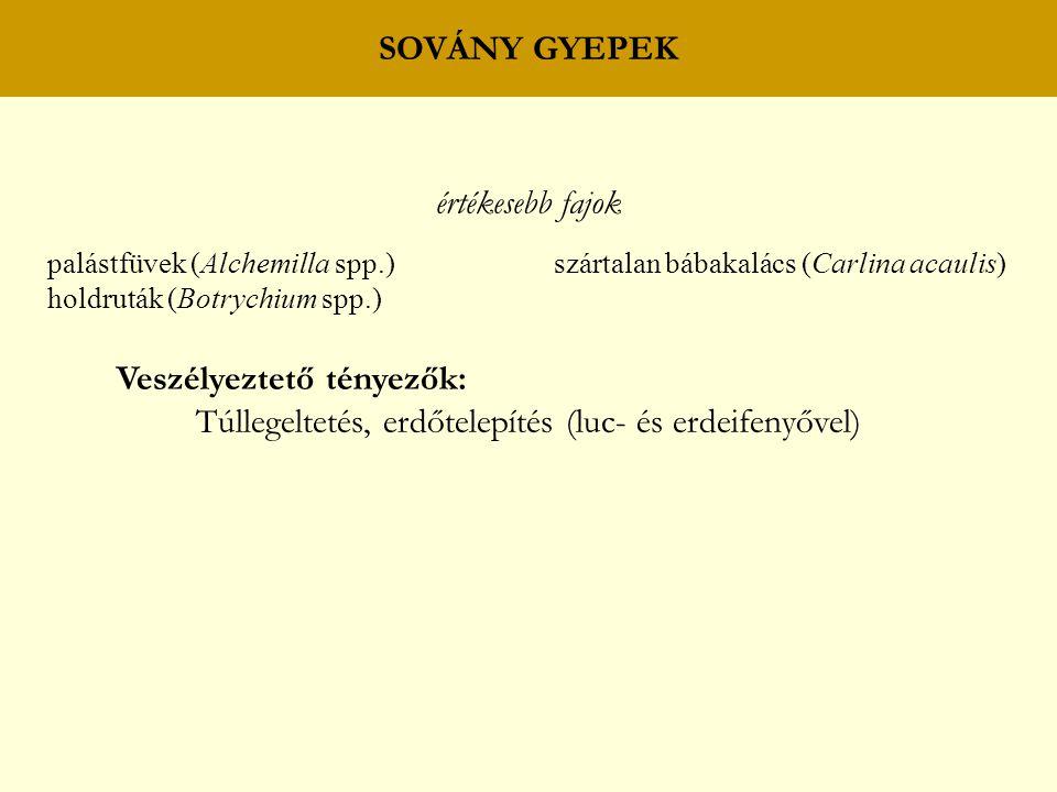 SOVÁNY GYEPEK értékesebb fajok palástfüvek (Alchemilla spp.) szártalan bábakalács (Carlina acaulis) holdruták (Botrychium spp.) Veszélyeztető tényezők