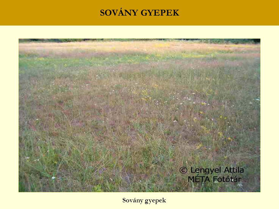 SOVÁNY GYEPEK Sovány gyepek