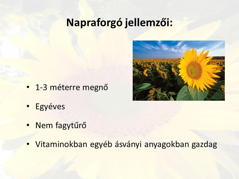 Napraforgó jellemzői: 1-3 méterre megnő Egyéves Nem fagytűrő Vitaminokban egyéb ásványi anyagokban gazdag