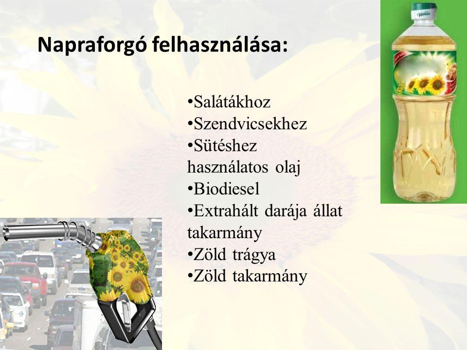 Napraforgó felhasználása: Salátákhoz Szendvicsekhez Sütéshez használatos olaj Biodiesel Extrahált darája állat takarmány Zöld trágya Zöld takarmány