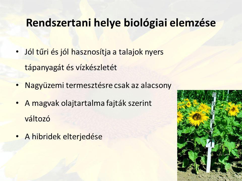 Rendszertani helye biológiai elemzése Jól tűri és jól hasznosítja a talajok nyers tápanyagát és vízkészletét Nagyüzemi termesztésre csak az alacsony A