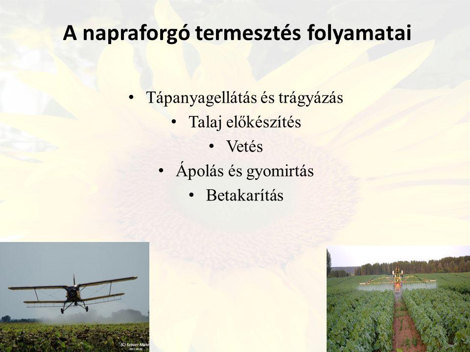 A napraforgó termesztés folyamatai Tápanyagellátás és trágyázás Talaj előkészítés Vetés Ápolás és gyomirtás Betakarítás