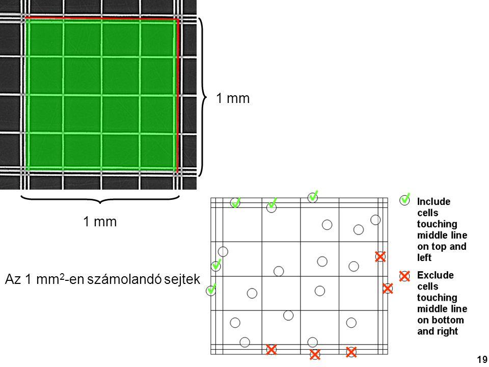 1 mm Az 1 mm 2 -en számolandó sejtek 19